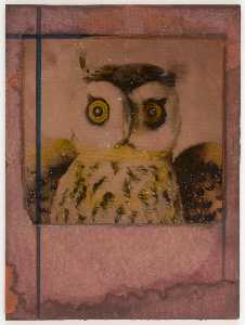 Untitled (close up of owl)