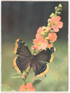 Untitled (butterfly on flower stalk)
