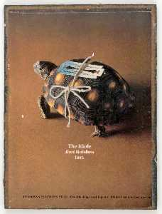 Untitled (turtle with double edged razor)