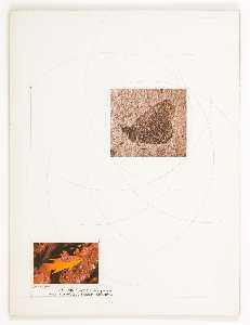 Untitled (fossilized butterfly)