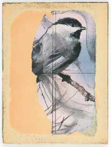Untitled (chickadee on tree branch)