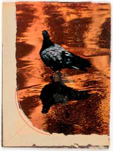 Untitled (photograph of pigeon reflected in water taken by Susan McCartney)