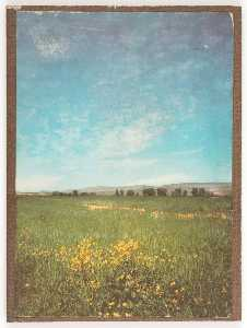 Untitled (field of green grass and yellow flowers)