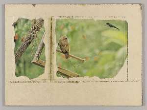 Untitled (owl on broken birdfeeder)
