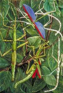 Leaf Insects and Stick Insects