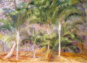 A Group of Palms in Mahé, Seychelles