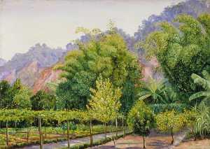 View in Mr Morit's Garden at Petropolis, Brazil