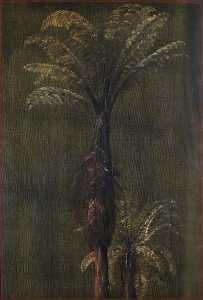 A New Zealand Tree Fern