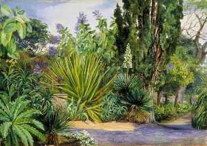 View in the Garden of Acclimatisation, Teneriffe