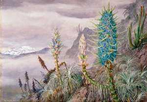 The Blue Puya and Cactus at Home in the Cordilleras, near Apoquindo, Chili