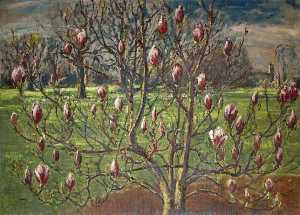 Magnolia soulangiana at Corsham
