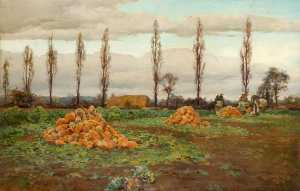The Swede Harvest
