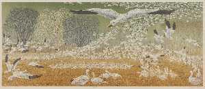 Wintering Snow Geese