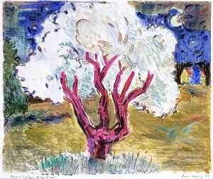Flowering Tree Bright Night