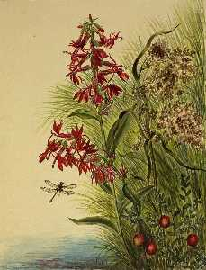 Mary Morris Vaux Walcott