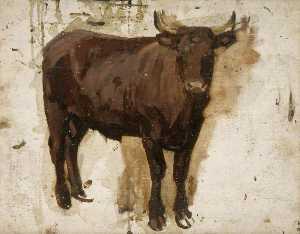 Brown Bullock