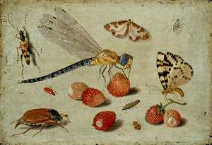 A Dragon fly, two Moths, a Spider and some Beetles, with wild Strawberries