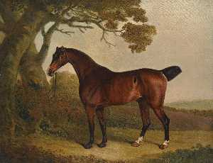 a bay horse tethered to a tree in a landscape