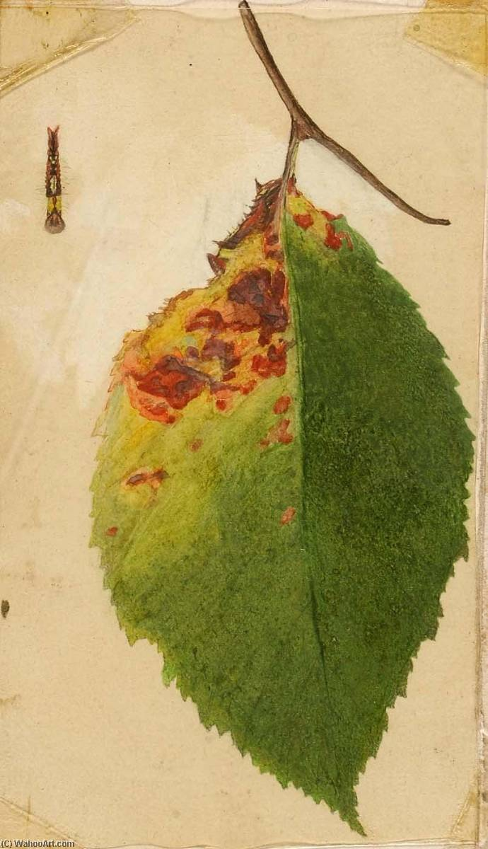 Wikioo.org - The Encyclopedia of Fine Arts - Painting, Artwork by Emma Beach Thayer - Crumpled and Withered Leaf Edge Mimicking Caterpillar, study for book Concealing Coloration in the Animal Kingdom