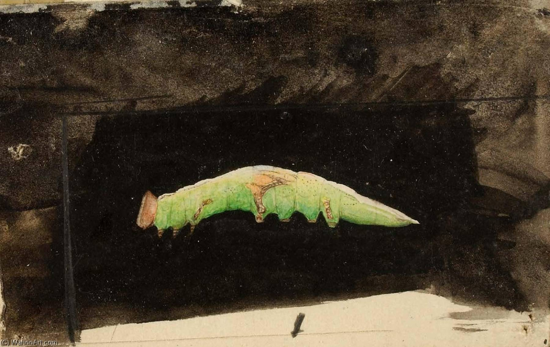 Wikioo.org - The Encyclopedia of Fine Arts - Painting, Artwork by Emma Beach Thayer - Larger Spotted Beach Leaf Edge Caterpillar, study for book Concealing Coloration in the Animal Kingdom
