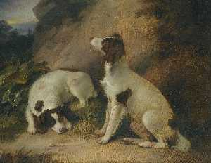 Two springer spaniels in a rocky landscape