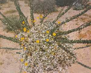 Untitled Daisy Bush Spiral, from the series Marks on the Landscape