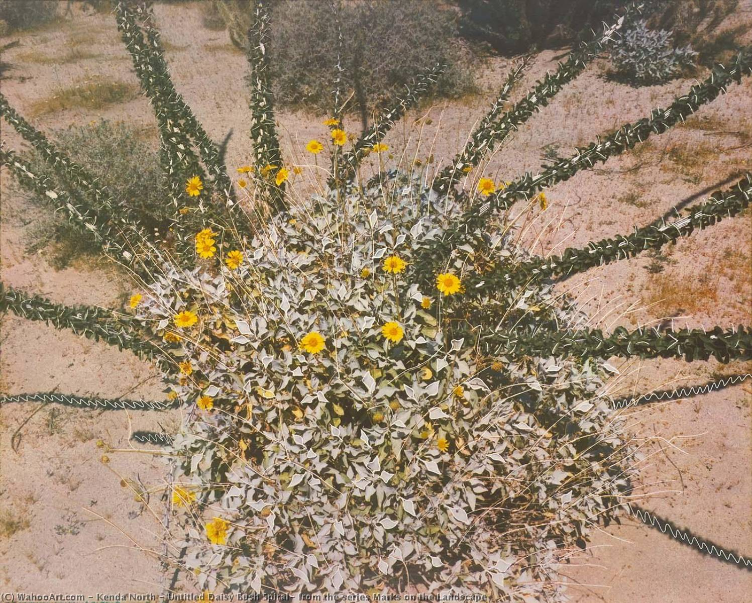 Wikioo.org - The Encyclopedia of Fine Arts - Painting, Artwork by Kenda North - Untitled Daisy Bush Spiral, from the series Marks on the Landscape