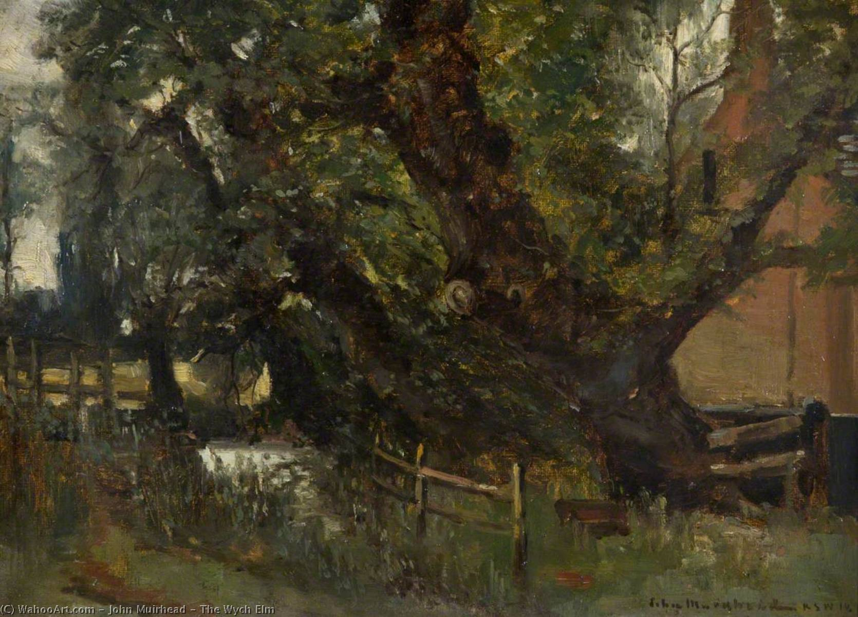 Wikioo.org - The Encyclopedia of Fine Arts - Painting, Artwork by John Muirhead - The Wych Elm