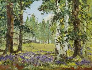 Perthshire Wood in Spring