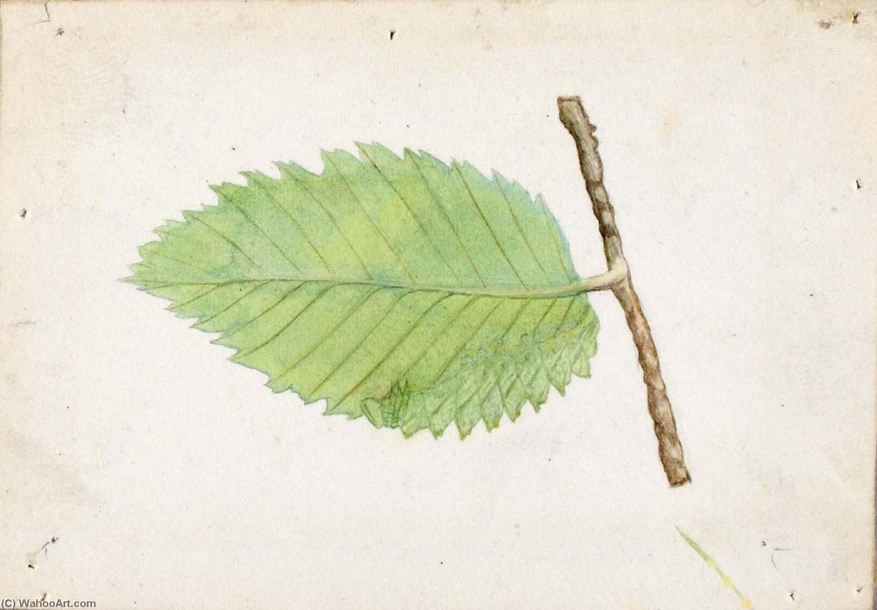 Wikioo.org - The Encyclopedia of Fine Arts - Painting, Artwork by Emma Beach Thayer - Jagged Leaf Edge Caterpillar, study for book Concealing Coloration in the Animal Kingdom