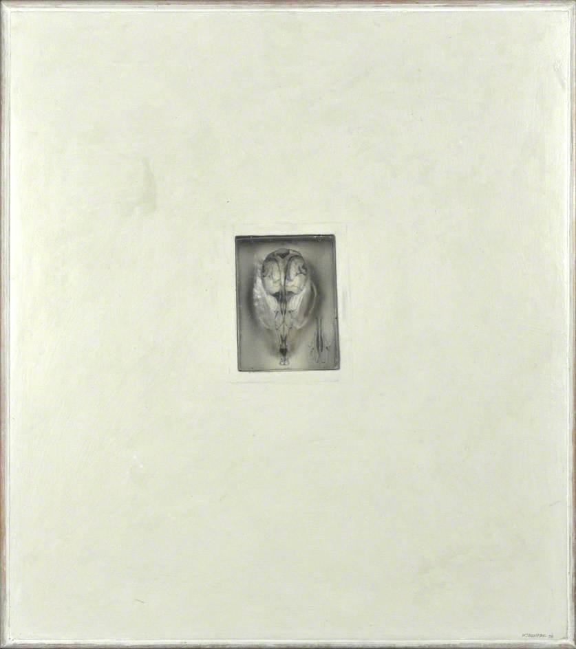WikiOO.org - Enciclopedia of Fine Arts - Pictura, lucrări de artă Will Maclean - Museum of Zoology – Skull Notes